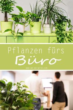 Air-cleaning plants for the office: the top 9 for a better indoor climate - Air-purifying plants are a blessing for every room. Here we present some plants for the office that - Potted Plants Patio, House Plants Decor, Air Plants, Plant Decor, Indoor Plants, Garden Care, Eco Garden, Amazing Gardens, Beautiful Gardens