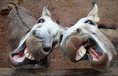 Silly Donkeys