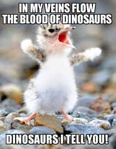 The blood of dinosaurs flows in my veins... Crazy Bird, Cute Animal Pictures, Funny Animal Photos, Animal Memes, Funny Pictures With Captions, Animal Quotes, Cute Animal Drawings, Picture Captions, Animal Pics