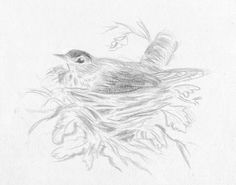 Try Silverpoint - The Age-Old Method of Fine Line Drawing - with Linda Birch Watercolor Disney, Watercolor Flowers, Watercolour, Line Drawing, Painting & Drawing, Silverpoint, Coloured Pencils, Art Drawings Sketches, Drawing Tutorials