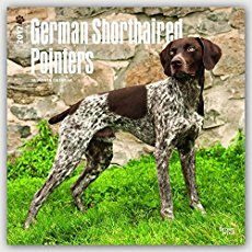 A complete guide to the German Shorthaired Pointer breed. Thinking of bringing a GSP puppy into your family? We will help you to make the right choice.