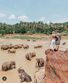 "Pinnawala Elephant Orphanage in Srik Lanka. ""The elephants come here everyday from the orphanage to bath & play in the river""  By: @doyoutravel & @gypsea_lust"