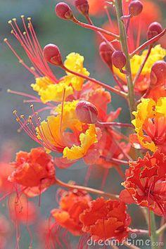yellow orange and red
