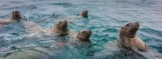 Into the Sea Lion's Den - Luxe Beat Magazine #travelstories New Adventures, Staycation, Travel Destinations, Sea, Road Trip Destinations, Destinations, Ocean