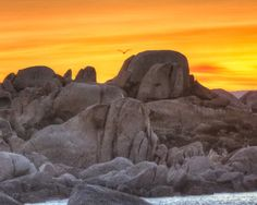 Corsica Sunrise by Donald Scarinci - A bird is awake and beginning the day as the early morning sun appears over the rocky landscape.
