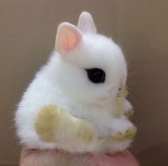 A baby Dwarf Hotot rabbit, so cute :) The unique dark ring around thier eyes just kills me with adorableness o3o