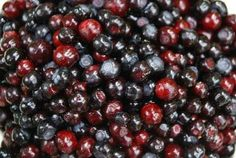 250 GARDEN HUCKLEBERRY (Ground Cherry) Solanum Melanocerasum Berry Fruit Bush Seeds by Seedville. $2.00. LIGHT REQUIREMENTS:  Sun  . . .  SOIL / WATER:  Average. Purple berries and purple flowers. When cooked such as in a pie, Huckleberries taste just like Blueberries! They are quite delicious, and will not stain you blue like Blueberries do. The berries actually must be cooked before they are eaten - uncooked they are bitter and slightly poisonous.. HARDINESS ZONE:  3 - 7...
