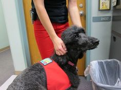 At Children's Hospital, therapy dogs help children find their voice - The Washington Post