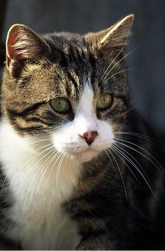 cute Tigger kitty