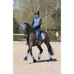 Charlotte Dujardin strutting her stuff in the new Corn Blue coloured set from LeMieux.