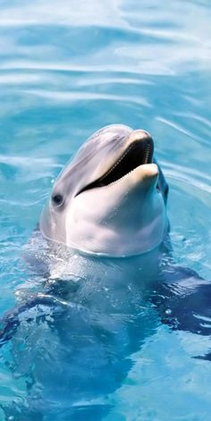 Why do we pen these amazingly intelligent creatures up and starve them for treats at Acquariums around the world?