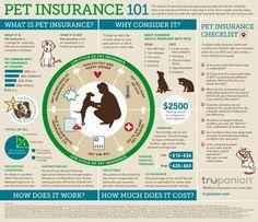 Pet insurance 101