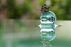 Gotas de agua en la naturaleza.