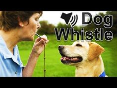 Adjustable Supersonic UltraSonic Obedience Sound Whistle For Dogs Training with Keychain Whistle Pet Animal Accessories - bcvvc Human Ear, Dog Whistle, Police Dogs, Dog Behavior, Training Your Dog, Health And Wellbeing, Pet Accessories, Labrador Retriever, Pets