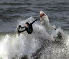 /surfing_with_sharks off Greenland... I think I would prefer being at Walmart.. never thought I would feel walmart was a better choice.