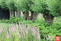 Groenregie - Natuurlijke tuin in Soest - Hoog ■ Exclusieve woon- en tuin inspiratie.