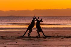 Photography by Jewelszee at Cape Hillsborough