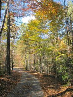 Fall in Virginia - Taken by Kristie Zapf