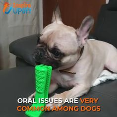 Dog Toothbrush Toy 😍 Dog Toothbrush Toy 😍 The Dog Toothbrush Toy encourages pets to clean their teeth every day. It is specially designed to clean teeth on both sides and is angled to fit comfortably Pet Dogs, Dogs And Puppies, Yorkie Dogs, Animals And Pets, Cute Animals, Dog Toothpaste, Dog Items, Dog Teeth, Dog Care