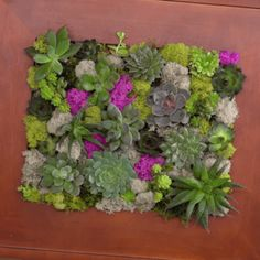 This picture frame planter blooming with succulents and moss is a vertical wall garden that'll make your space come alive. (And it's not complicated to DIY!)