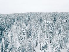 Snow-covered trees in Oulanka National Park in Finland