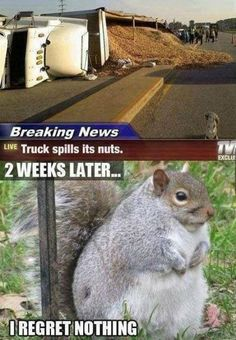 Funny pictures about Chubby squirrel regrets nothing. Oh, and cool pics about Chubby squirrel regrets nothing. Also, Chubby squirrel regrets nothing. Animal Jokes, Funny Animal Memes, Cute Funny Animals, Funny Animal Pictures, Funny Animal Videos, Funny Cute, Funny Photos, Haha Funny, Funny Memes