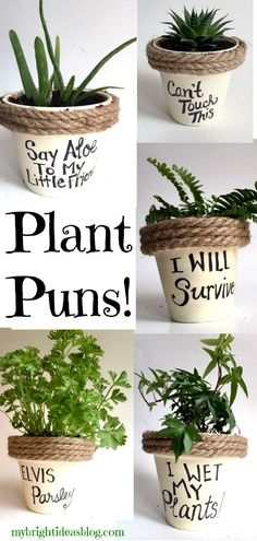 Puns on Painted Potted Flower Pots - Adorable Gift Idea to Make Them Smile Easy Gift Idea! Paint flower pots, add rope and a silly pun. Even kids could make this! Paint flower pots, add rope and a silly pun. Even kids could make this! Painted Flower Pots, Painted Pots, Decorated Flower Pots, Diy Garden, Garden Art, Garden Puns, Garden Planters, Outdoor Garden Decor, Diy Planters