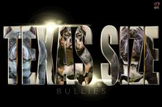 Featured Kennel: TEXAS SIZE BULLIES - BULLY KING Magazine