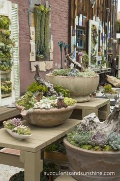 Succulents can be arranged in so many clever ways! Driftwood in arrangements at the Succulent Cafe in Oceanside - /// really want to go here! can be arranged in so many clever ways! Driftwood in arrangements at the Succulent Cafe in Oceanside - /// really Growing Succulents, Succulents In Containers, Cacti And Succulents, Planting Succulents, Planting Flowers, Succulent Gardening, Garden Planters, Container Gardening, Succulent Arrangements