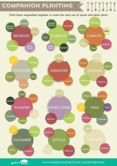Pairing vegetables to grow in the garden :)