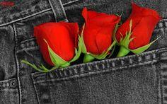 Gift Photos of Rose on Valentine Day 2015   Happy Valentine Day 2015
