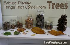 Tree & Leaf Science Activities, Tree Life Cycle for Preschool, Pre-K Things That Come from Trees: Science Display Science Center Preschool, Fall Preschool, Kindergarten Science, Science Classroom, Science For Kids, Science Activities, Science Nature, Creative Curriculum Preschool, Science Table
