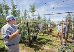 Travis Allan, from Yakima Valley Orchards, shows a v-trellis system installed on a metal framework during the first day of the IFTA Washington tour on July 15, 2015. Allan said he uses heavy gauge steel, which costs more per acre, to help the system hold up to heavy crops and high winds. <b>(TJ Mullinax/Good Fruit Grower)</b>