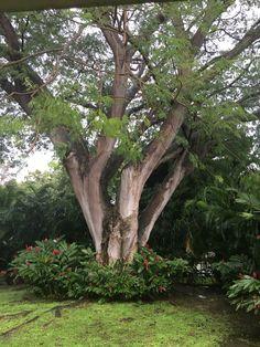 Panama City Panama Panama City Panama, Plants, Plant, Planets
