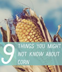 Americas Farmers ~ Everything You Ever Wanted to Know About Corn