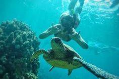 Resultado de imagen de Snorkeling in Maui