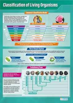 Classification of Living Organisms Poster