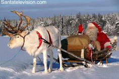 Joulupukki poron kanssa rekiajalulla Pellossa Länsi-Lapissa