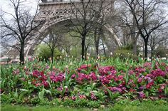 Haute Pink Flowers At Eiffel Tower