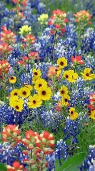 Gotta love these wild flowers! Gotta love these wild flowers! The post Gotta love these wild flowers! appeared first on Easy flowers. My Flower, Flower Power, Beautiful Flowers, Cactus Flower, Exotic Flowers, Purple Flowers, Spring Flowers, Wild Flowers, Fresh Flowers