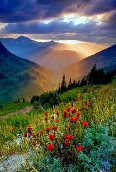 Sunbeams touching the soft earth