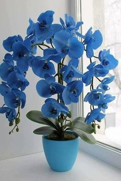 PLEASE, please don't use dyed flowers! It makes me absolutely cringe and looks so tacky and fake. Beautiful Rose Flowers, Unusual Flowers, Types Of Flowers, Amazing Flowers, Absolutely Flowers, Orchid Flower Arrangements, Orchid Plants, Exotic Plants, Blue Orchids