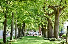 #Boschendal - Do you feel like having a #picnic in the shades of huge trees…