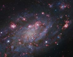NGC 2403 stands within the boundaries of the long-necked constellation Camelopardalis. Some 10 million light-years distant and about 50,000 light-years across, the spiral galaxy also seems to have more than its fair share of giant star forming HII regions, marked by the telltale reddish glow of atomic hydrogen gas. In fact, NGC 2403 closely resembles another galaxy with an abundance of star forming regions that lies within our own local galaxy group, M33 the Triangulum Galaxy.