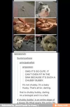 This is a very cute chubby bubby. Funny Cute, The Funny, Hilarious, Tumblr Stuff, Funny Tumblr Posts, Funny Animals, Cute Animals, Best Of Tumblr, Just For Laughs