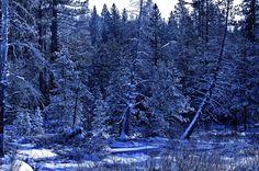 "500px / Photo ""Dreamy Snow at Tahoe"" by Sam Okamoto"