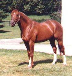 Secretariat . . . horse racing!