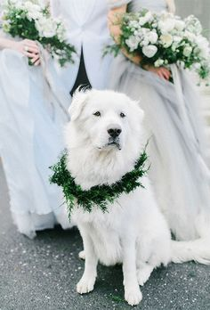 Bride with English Golden Retriever with Tinsel Wreath Collar Ways to Include Your Pet in the Wedding | Brides.com