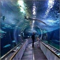 Aquarium of the bay san francisco ca