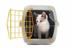 Katze an Transportbox gewöhnen - http://www.transportbox-katzen.de/katze-transportbox-gewoehnen/
